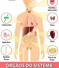 órgãos do sistema imunológico e função pdf