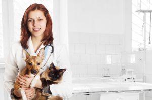 curso de interpretação de exames laboratoriais veterinários