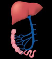 problemas no fígado exames laboratoriais