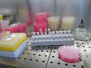 laboratório de microbiologia clínica ibap
