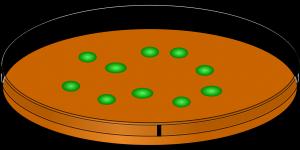 resistência bacteriana - antibiograma