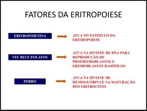 tudo sobre o sangue - Fatores que interferem na Eritropoiese