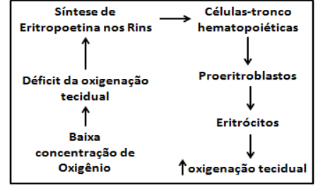 tudo sobre o sangue - Oxigenação tecidual e a ação da EPO
