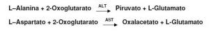 Ação das enzimas transaminases
