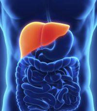 enzimas hepáticas fígado marcadores