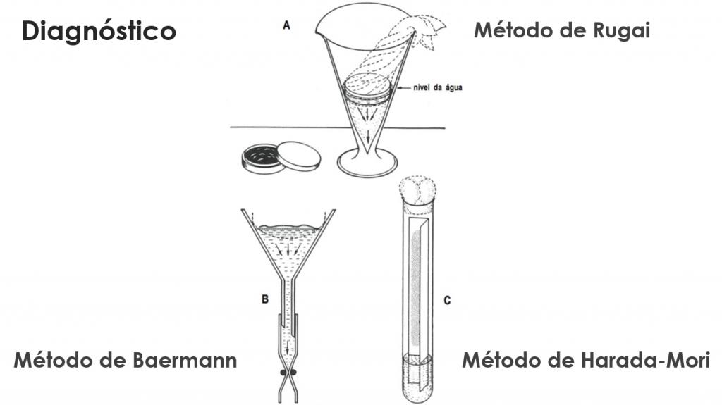 estrongiloidiase intestinal sintomas ciclo tratamento transmissão morfologia diagnostico baermann rugai harada mori