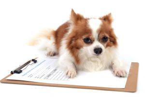 interpretação de exames laboratoriais veterinários 4