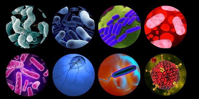 o que é microbiologia clínica