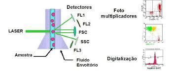 Citometria de fluxo etirócitos citometro