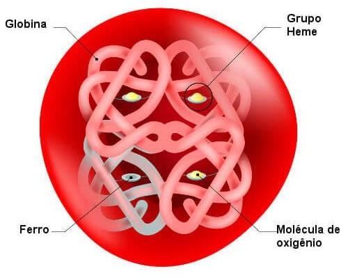 Hemoglobina hemácia hemoglobina glicada