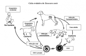 Larva migrans visceral toxocaríase