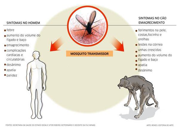 sintomas de calazar kalazar Leishmaniose visceral