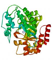 Adenosina Deaminase TUBERCULOSE