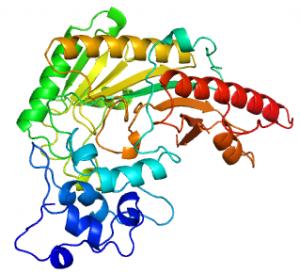 Creatina quinase ck mb creatino fosfoquinase creatina fosfatase