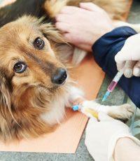 Hematologia e Bioquímica Clínica Veterinária hemáciaslaboratório clínicoeritrócitosdiagnostico citologico oncologia veterinárialaboratório veterináriomedicina veterinária