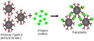 anticorpo antigeno Reações de Imunoprecipitação