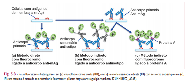antigeno membrana Imuno-histoquímica Imunohistoquímica exame imuno histoquímico exame imunohistoquímico estudo imuno histoquímico