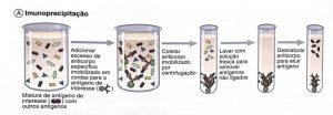 eletroforese em gel antigeno anticorpo Reações de Imunoprecipitação