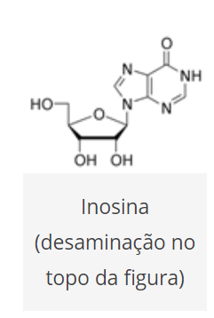 estrutura quimica da inosina Adenosina Deaminase (ADA) no diagnóstico da tuberculose