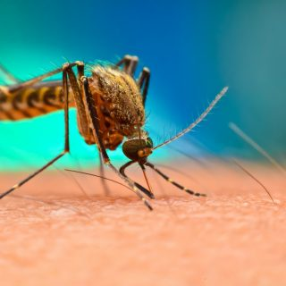 malária plasmodium malaria sintomas sintomas da malaria sintomas de malaria tratamento
