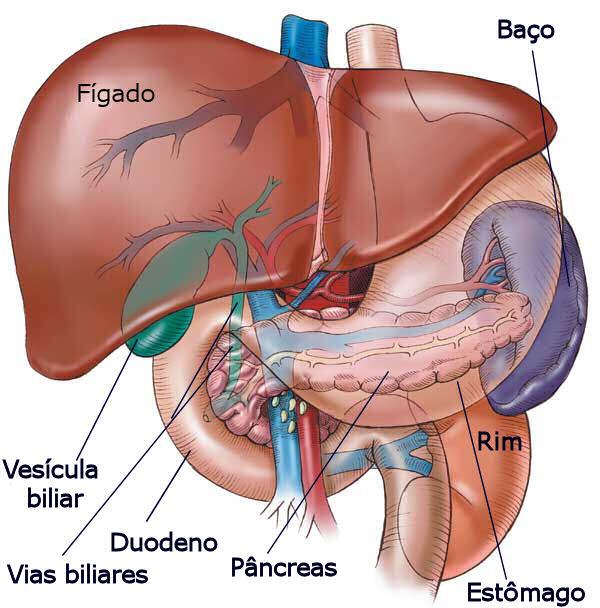 fígado anatomia marcadores hepaticos tgo tgp tgo tgp tgo e tgp tgp alto tgp exame ast tgo bilirrubina alt tgp