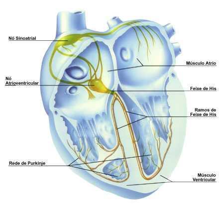 anatomia do coração humano primitivo anatomia cardíaca anatomia do coração anatomia de coração coração anatomia anatomia coração