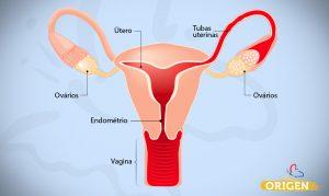 sistema reprodutivo feminno ovarios utero tubas endometrio vagina anatomia do aparelho reprodutivo
