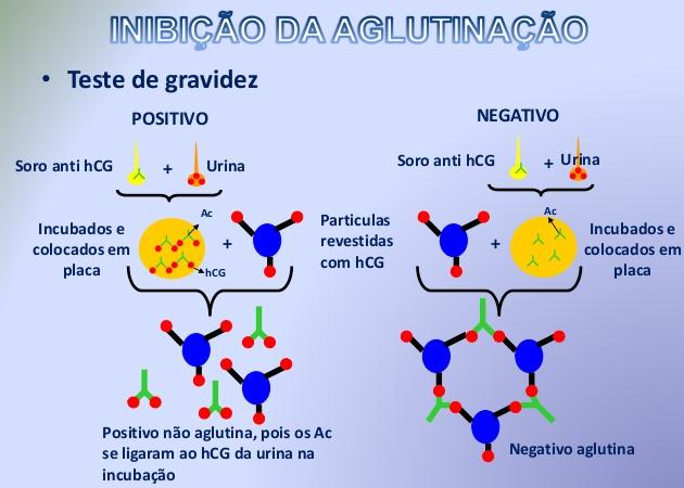 Imunoaglutinaçã inibição da aglutinação teste de combs anticorpos aglutinação direta inibiçao da aglutinação