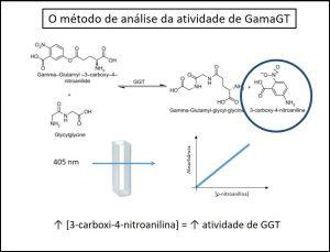 exame de sangue Gama GT alta elevado análise da atividade de Gama GT