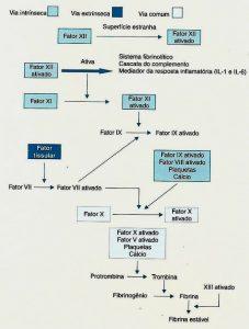 função da cascata de coagulação via extrinseca via intrinsica via comum sistema fibriolitico rombina fibrina