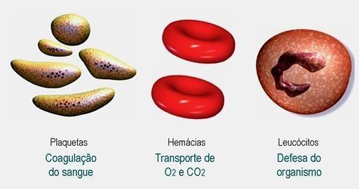 tipos de células do sangue hemacias leucócitos plaquetas