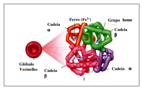 talassemia anemia